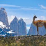 América Tours propone los mejores programas para los destinos australes