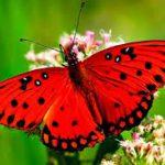 Entomología mariposas