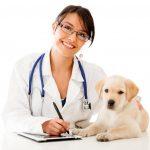 Rutinas de salud para los perros: un reto después del verano y durante todo el año