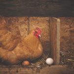 Instrumentos tecnificados contribuyen con la producción avícola