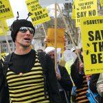 Un millón de abejas sudafricanas mueren en Ciudad del Cabo