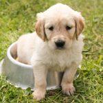 Mascotas: Importancia de alimentar correctamente a tu cachorro