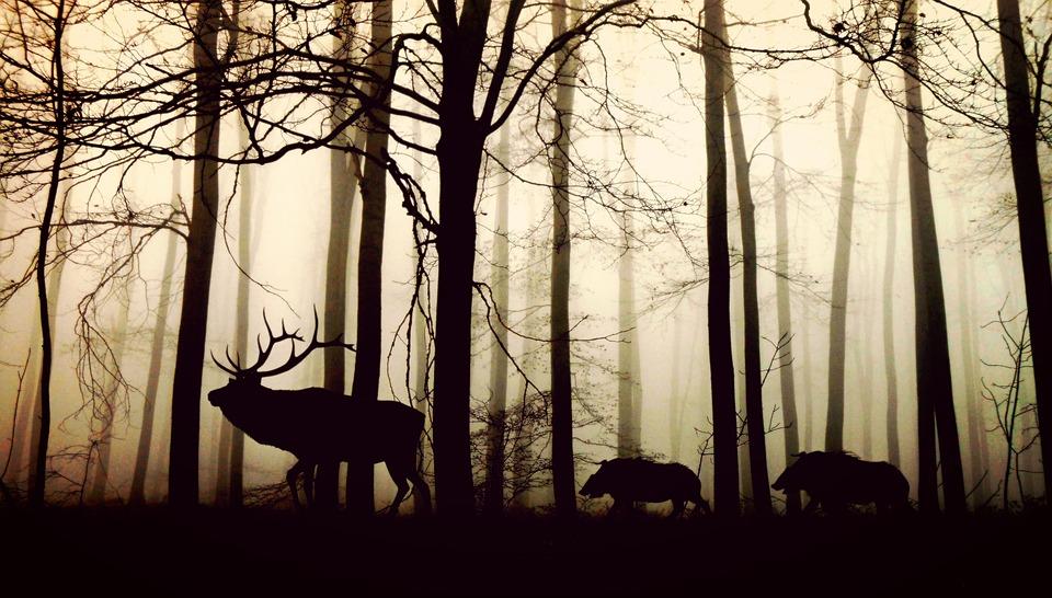 Caza nocturna: los accesorios para cazadores más vendidos