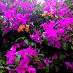 Las diferentes especies de plantas ornamentales