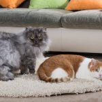 ¿Se puede tener un gato en un piso?