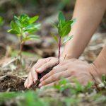 Consejos para el medio ambiente