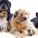 Los problemas hepáticos en perros y cómo prevenirlos