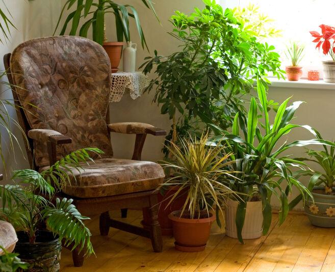 Plantas para tener en casa