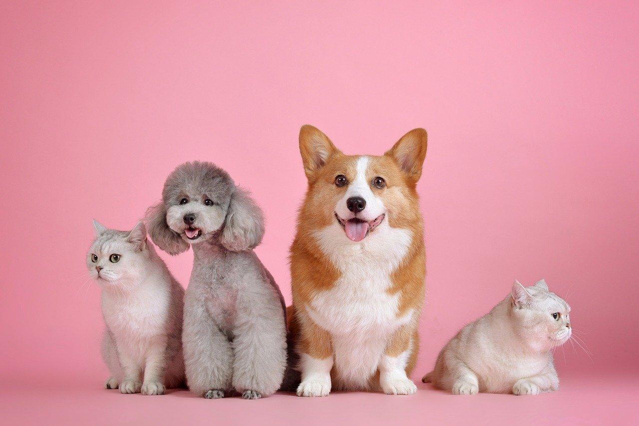 ¿Cómo puedo aprovechar un seguro para mascotas?